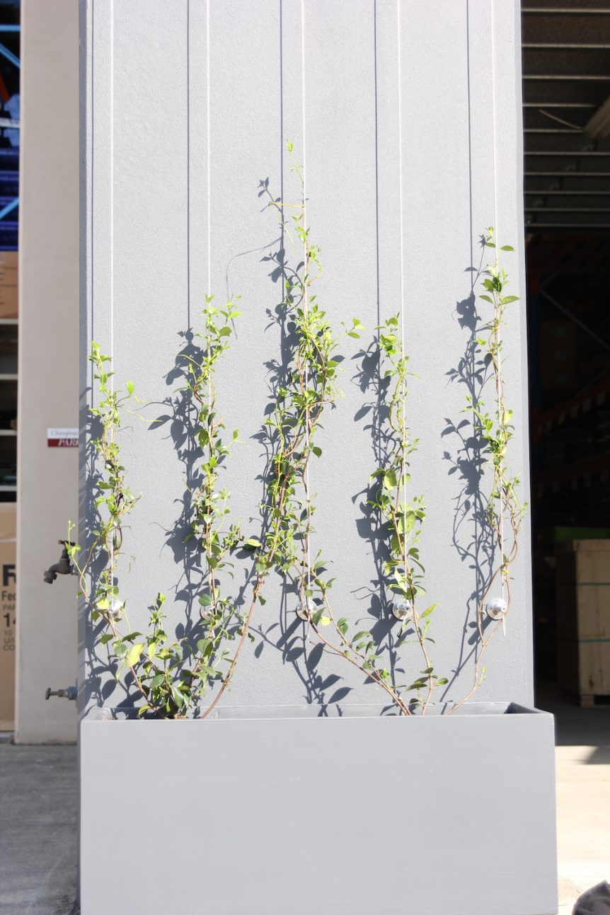 green wall trellis